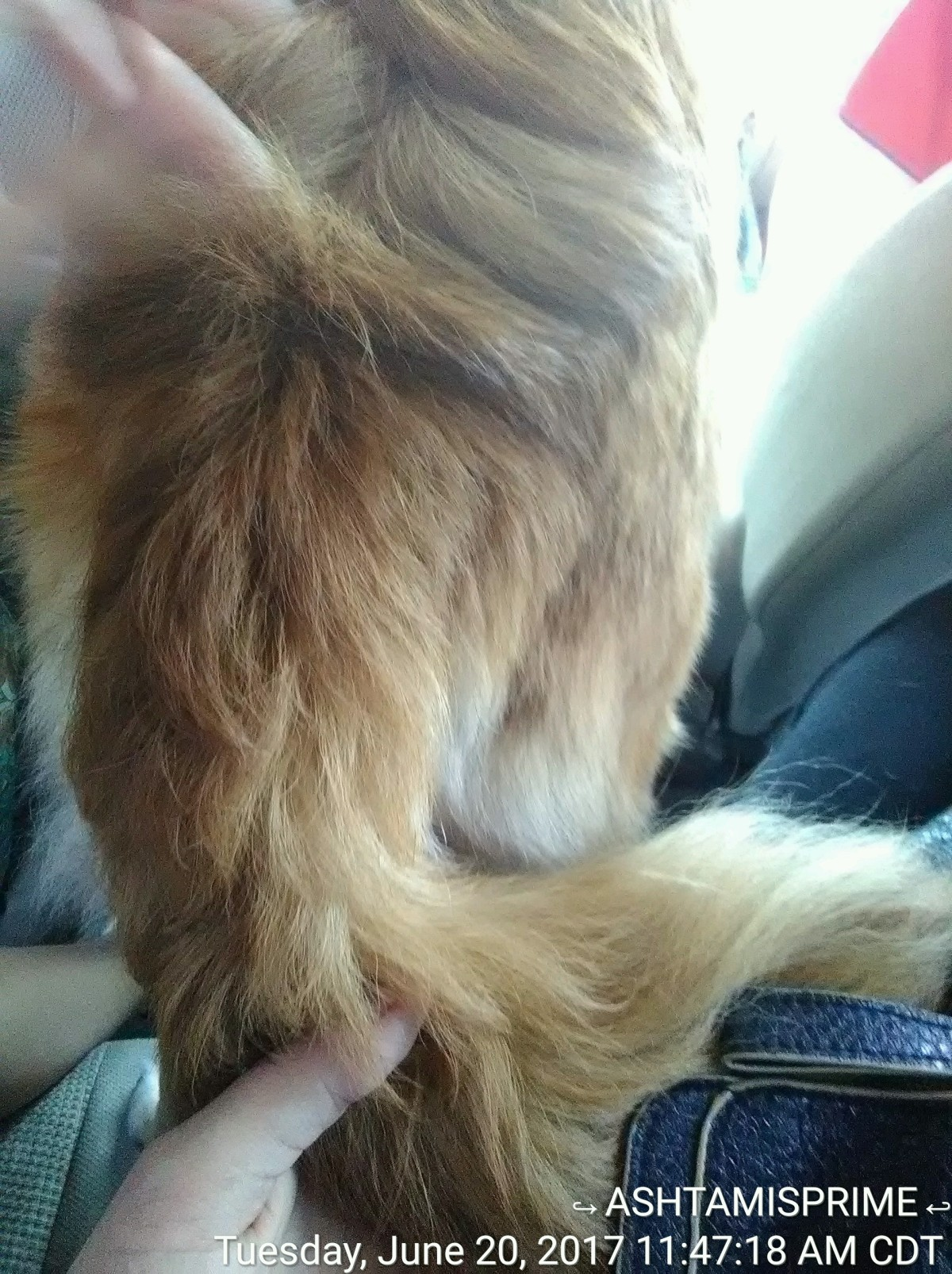 My mom's dogs butt looks like a woolly mammoth