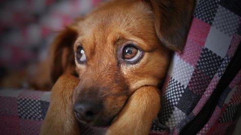 dog-3071334__340